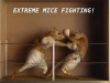 Mice fighting.png