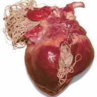 Heart Larva