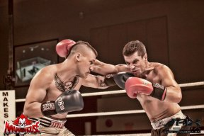 boxer3559