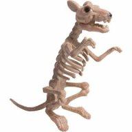 Big Boned Rat
