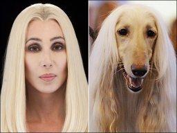 Cher Dawg