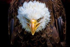Jim Eagle