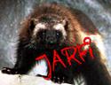 Jarfi